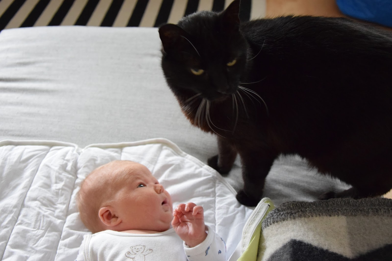 vauvan neuvolakäynnit