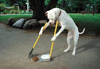perro recogiendo caca