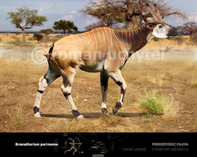 giraffidae fosil Bramatherium