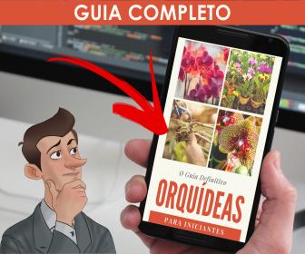 Conheça os segredos sobre o cultivo de Orquídeas que muitas pessoas não sabem