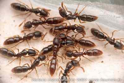 Neuromonde peut on changer avec une fourmi - Comment eradiquer les fourmis ...
