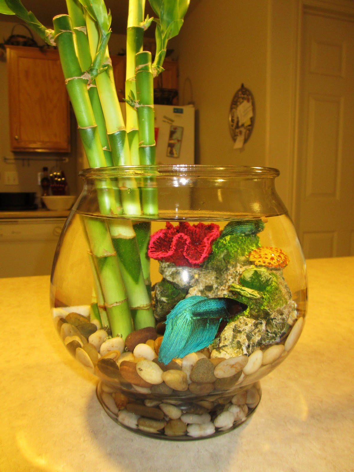 I love this idea i love bamboo and had a plant all through hs i love bamboo and had a plant all through hs my grandfather was an aquamarine biologist and he passed away a few years ago i pinteres reviewsmspy