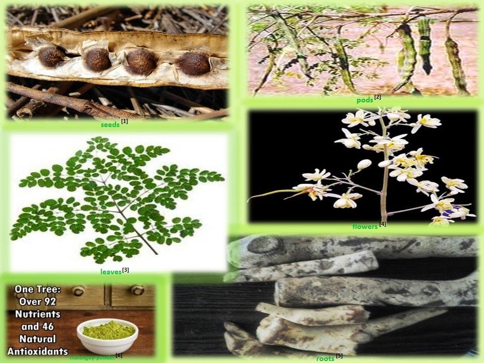 thesis antioxidant activity plants