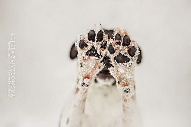 beautiful animals,  majestic photos