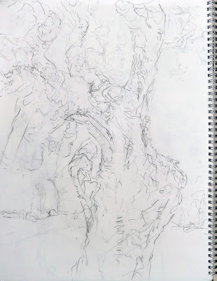 Hamilton's Cork Oak Jill Evans pencil on paper 2013