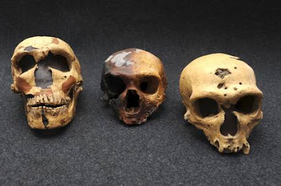 Remains of both Neanderthals and Homo sapiens found in caves near Naples
