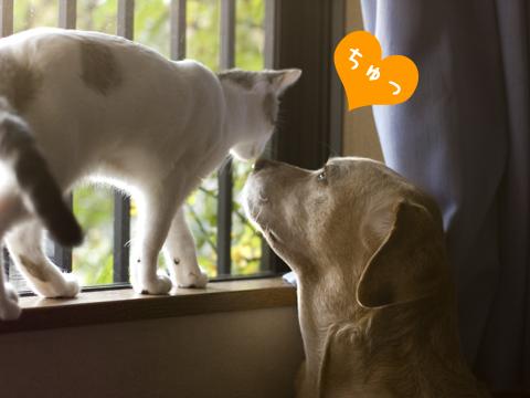 子猫と犬のキス