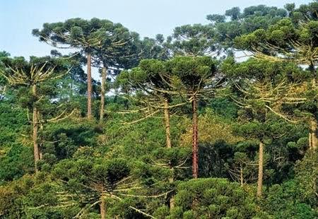 Paisagens e ecossistemas