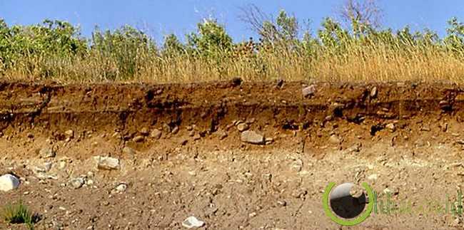 Tanah Podzolik