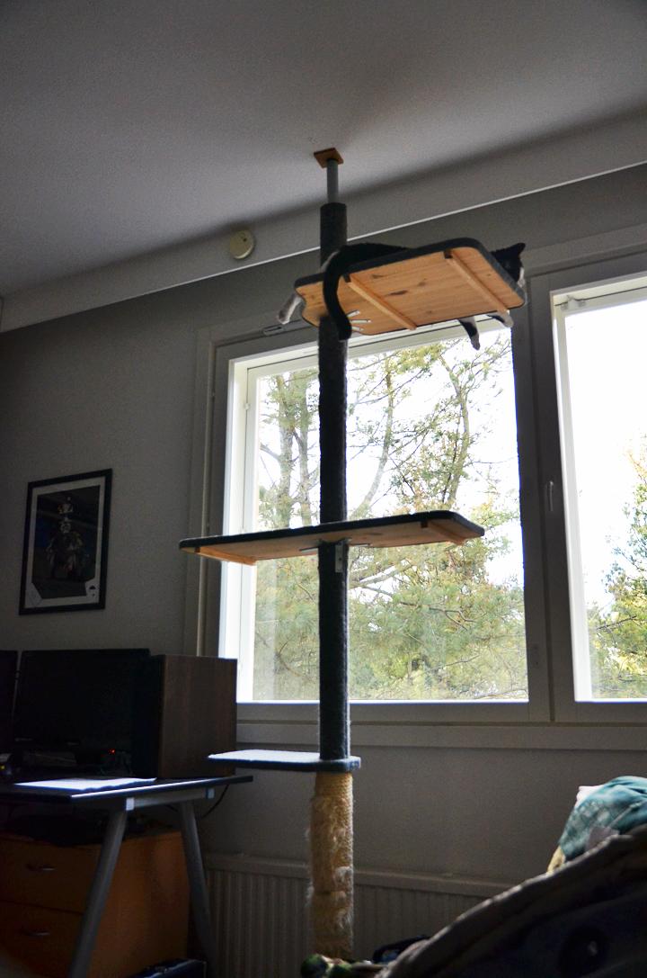 kissan kiipeilypuu