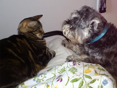 katt & hund