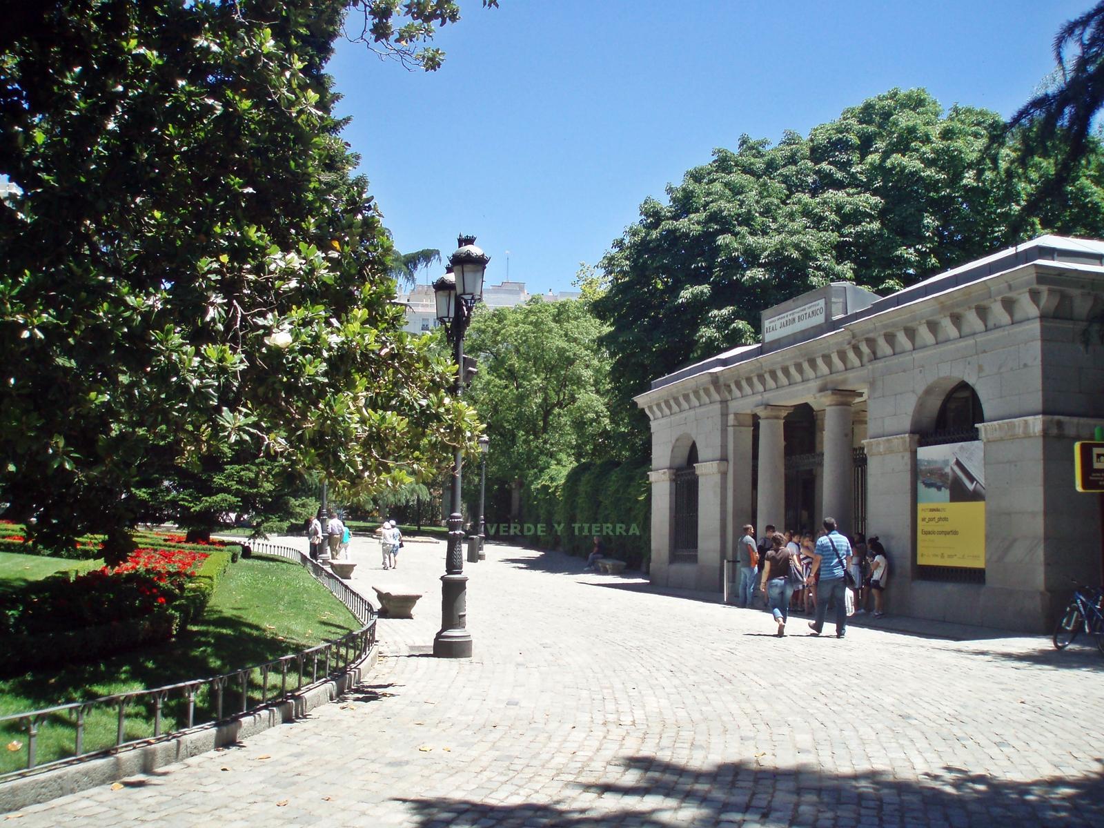 Viajero empedernido de visita en el jard n bot nico de madrid for Entrada jardin botanico madrid