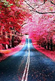 """""""Outono é outra primavera, cada folha uma flor."""""""