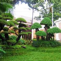 Taman minimalis depan rumah type 36