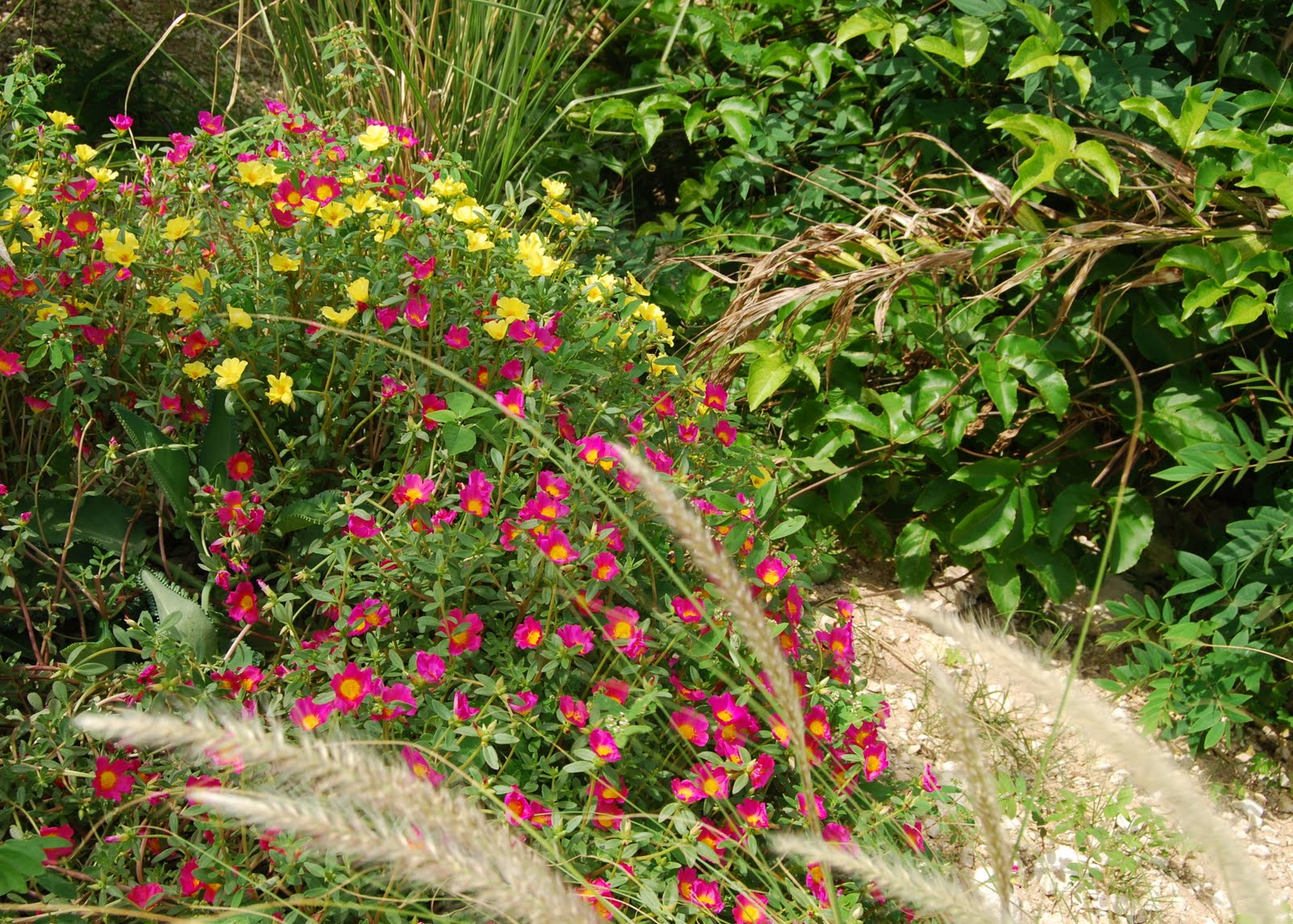 Happy July Blooms Day A Caribbean Garden