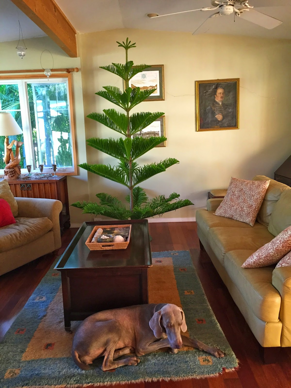 Small Things Bright and Beautiful: Christmas 2014 - Norfolk Pine Tree