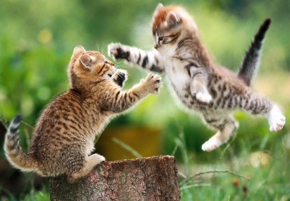 Foto de gatos en pleno juego