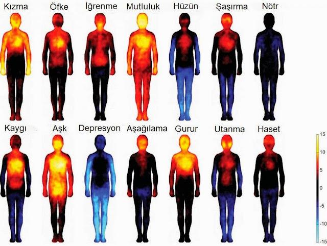 duygu vücut haritası