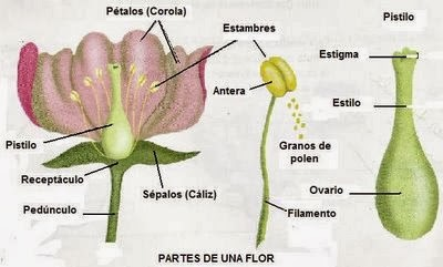 Imagenes de reproduccion sexual y asexual en plantas