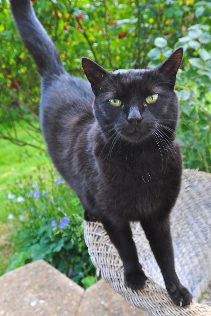 Why Are Black Cats Hard To Rehome