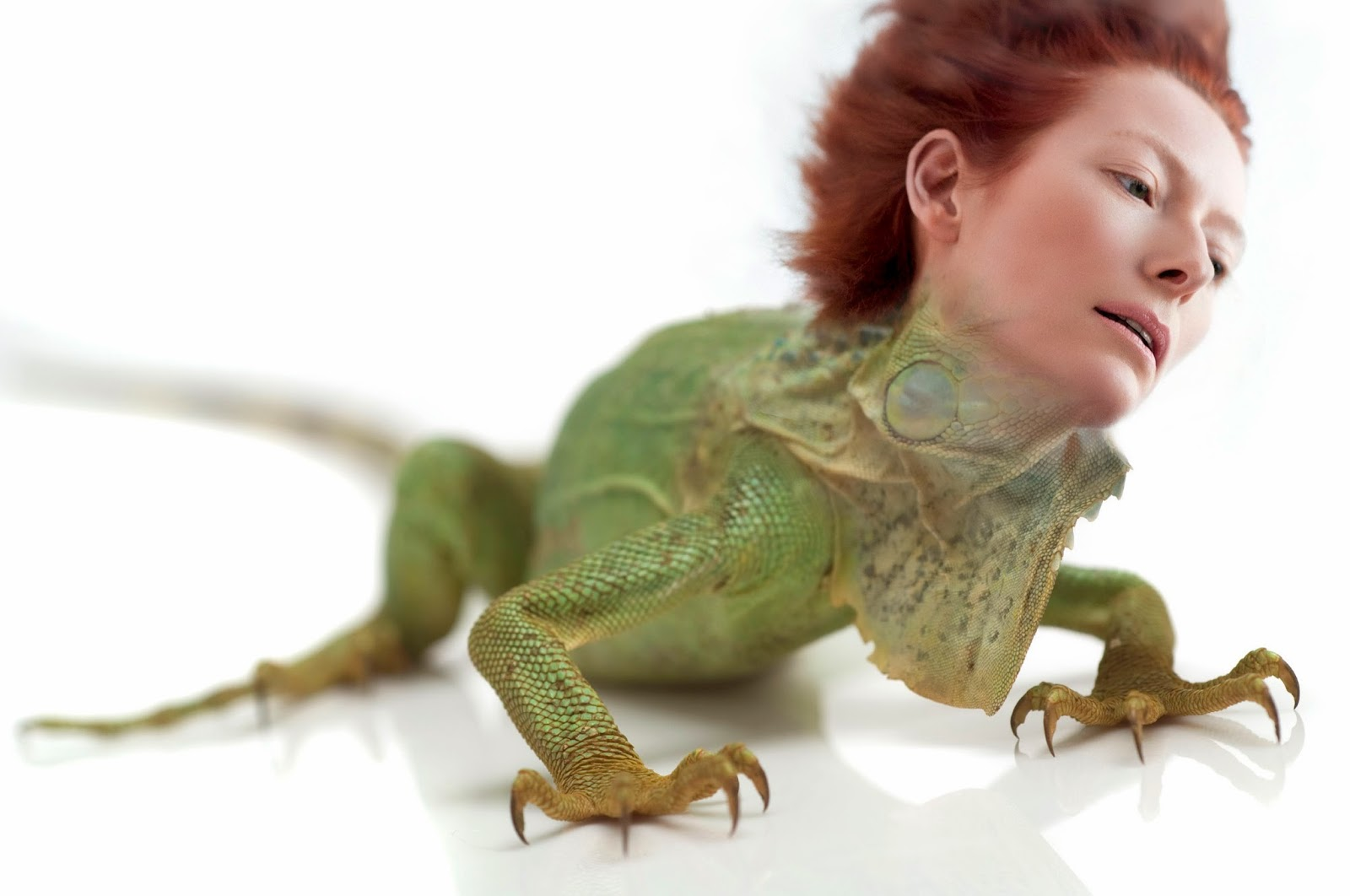 tilda-swinton-lizard, tilda-swinton-animal, tilda-swinton-reptile, tilda-swinton-red-hair, tilda-swinton-face