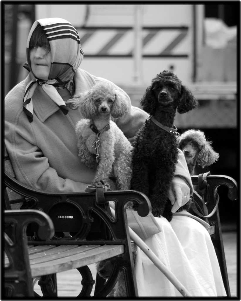 the lady with the pet dog by anton chekov essay It was said that a new person had appeared on the sea-front: a lady with a little  dog dmitri dmitritch gurov, who had by then been a fortnight at yalta, and so.