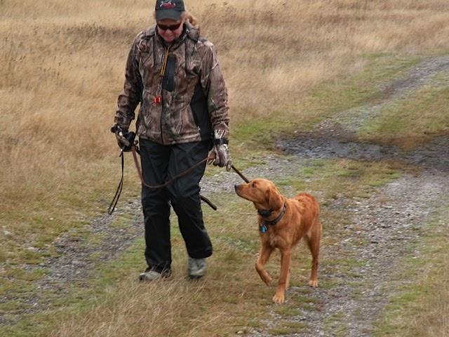 How Do I Train My Dog To Retrieve Birds