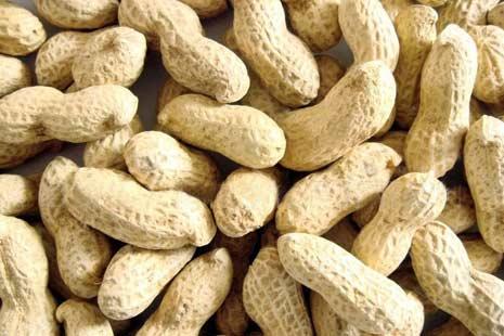Image Result For Manfaat Kulit Kacang Tanah Untuk Kesehatan