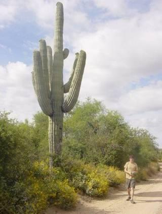 David Grundman Mati tertimpa kaktus raksasa