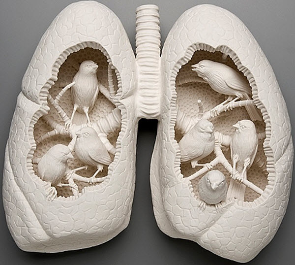 Simply creative porcelain sculptures art by kate macdowell