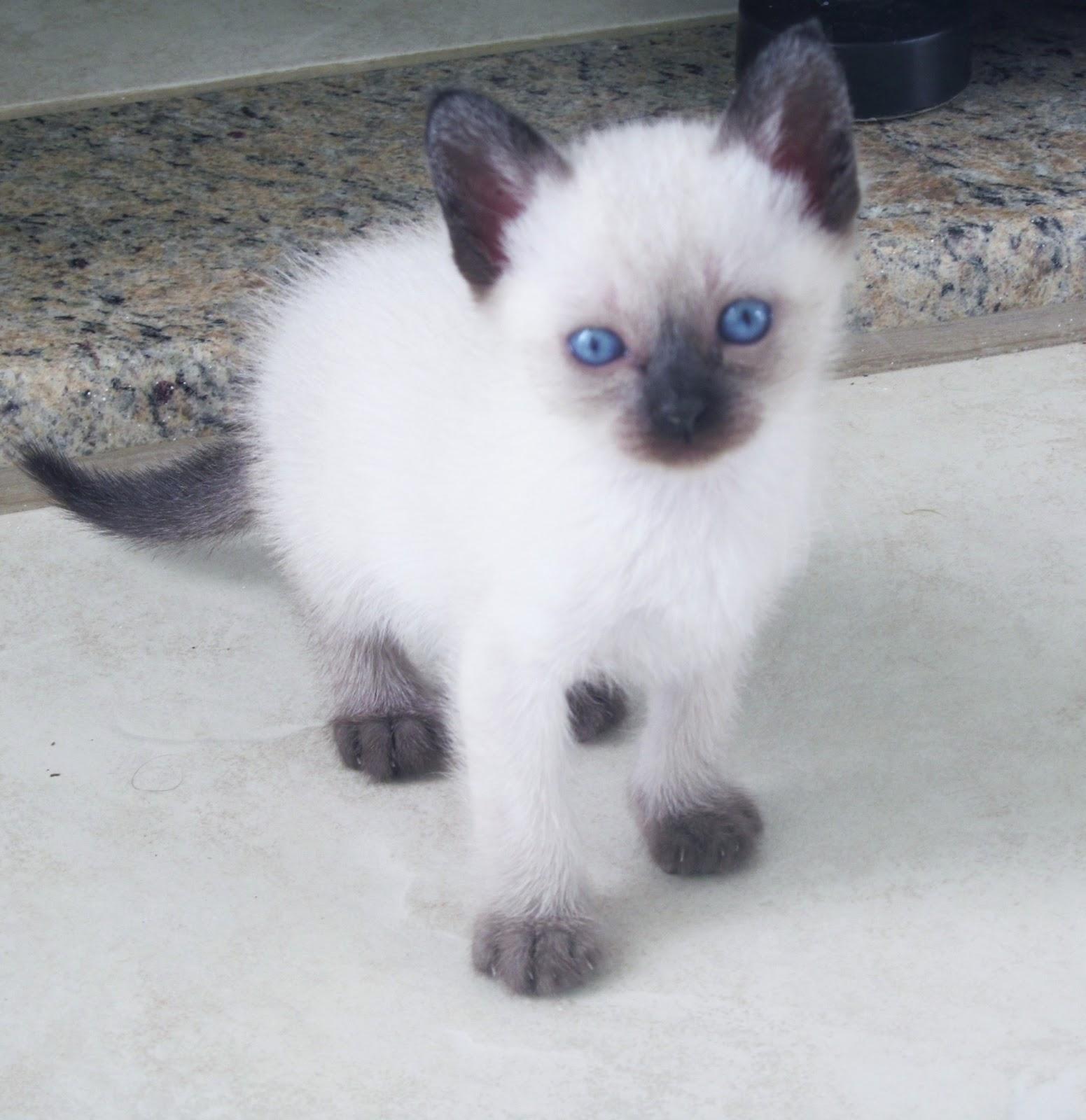 Mania pet shop cuidados com seu filhote de gato - Cuidados gato 1 mes ...