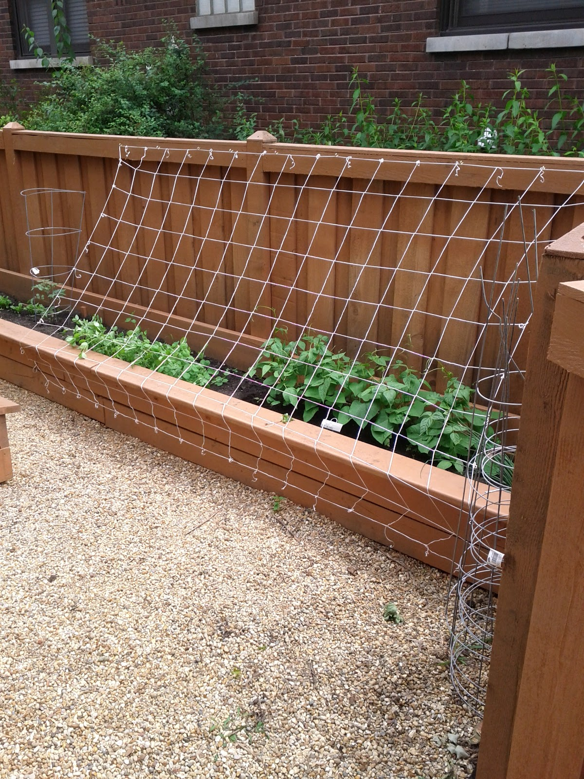green bean trellis installed 2011