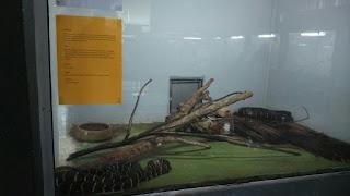 Tempat Pelancongan Menarik di Malaysia, Perlis Indera Kayangan, Taman Ular dan Reptilia Perlis, Qiya, Saad