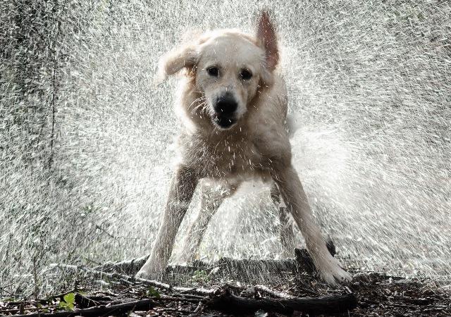¿Por qué el perro arrastra el ano por el suelo?