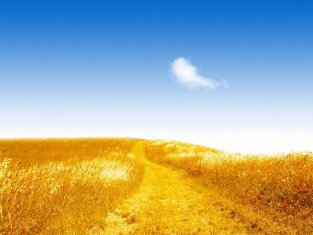 Небо – символ миру та пшеничне поле