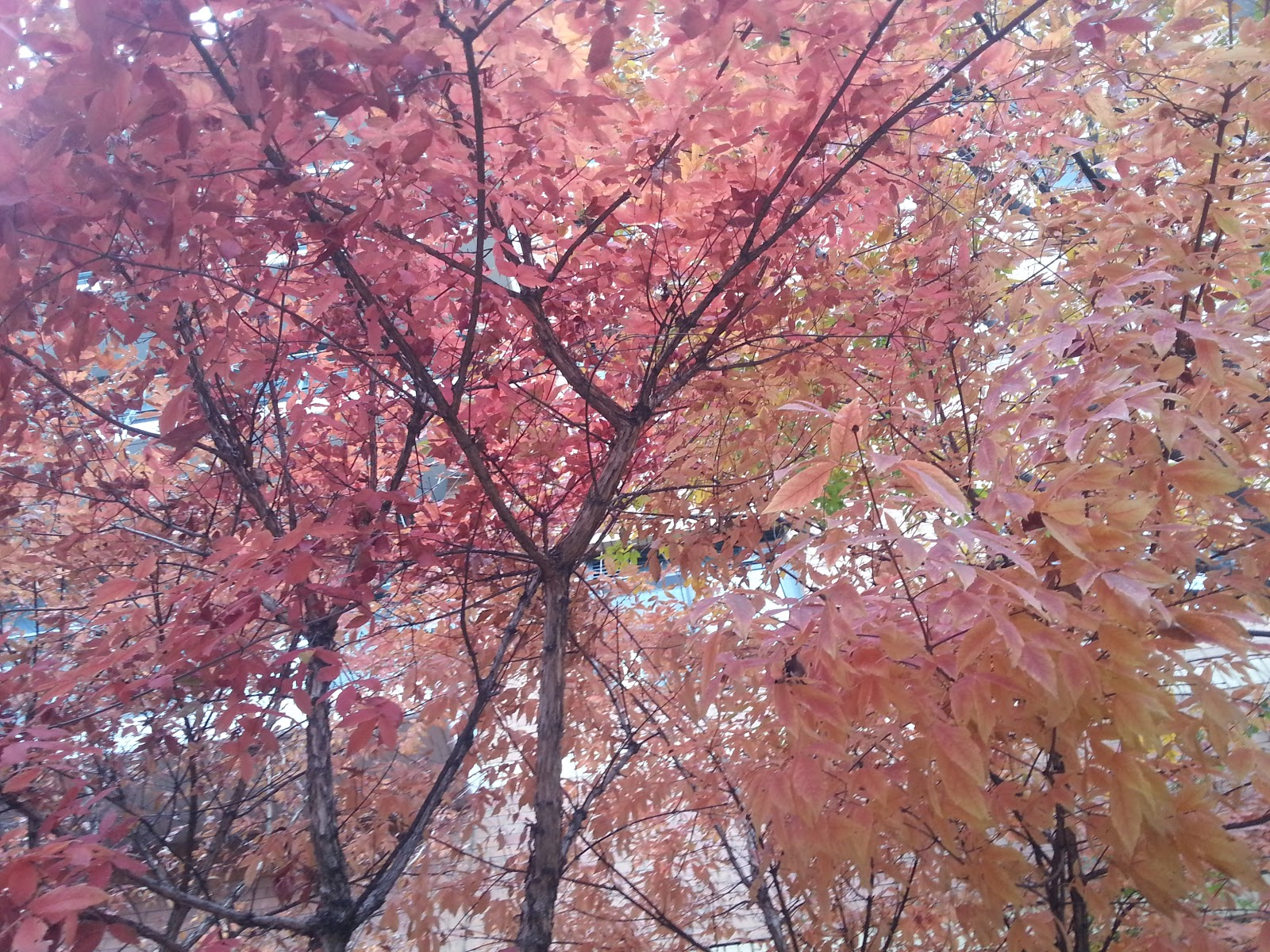 fall colors in Seoul.