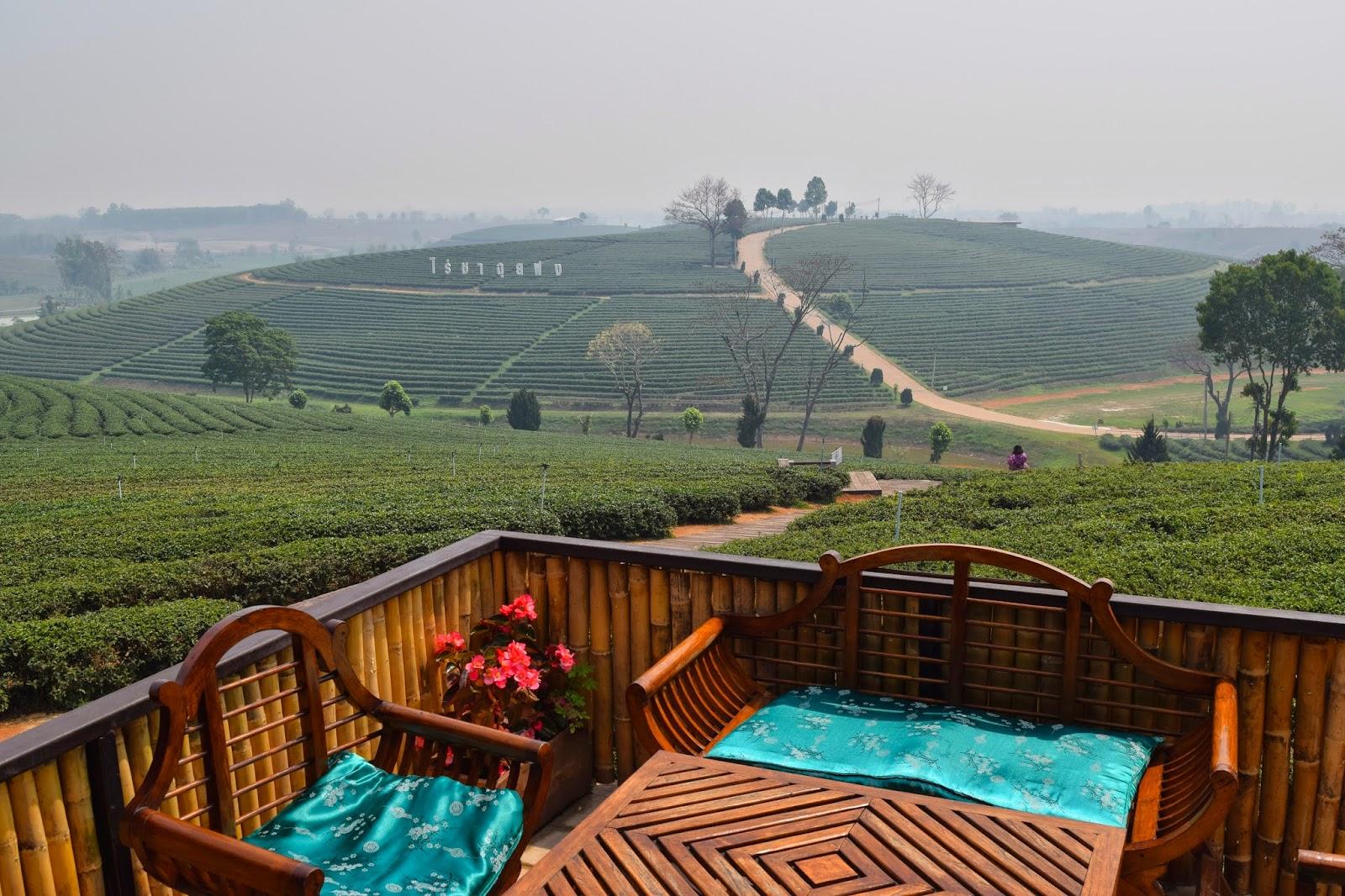 Chang Rai Tea Plantation