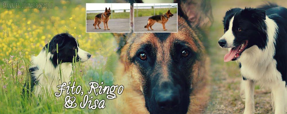 Fito, Ringo ja Iisa