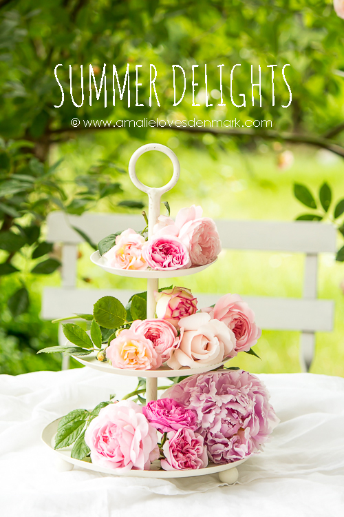 Amalie loves Denmark Rosenfreuden und Blütenfülle
