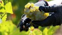 2013 - Romania - cea mai spectaculoasa redresare a productiei de vin, la nivel mondial