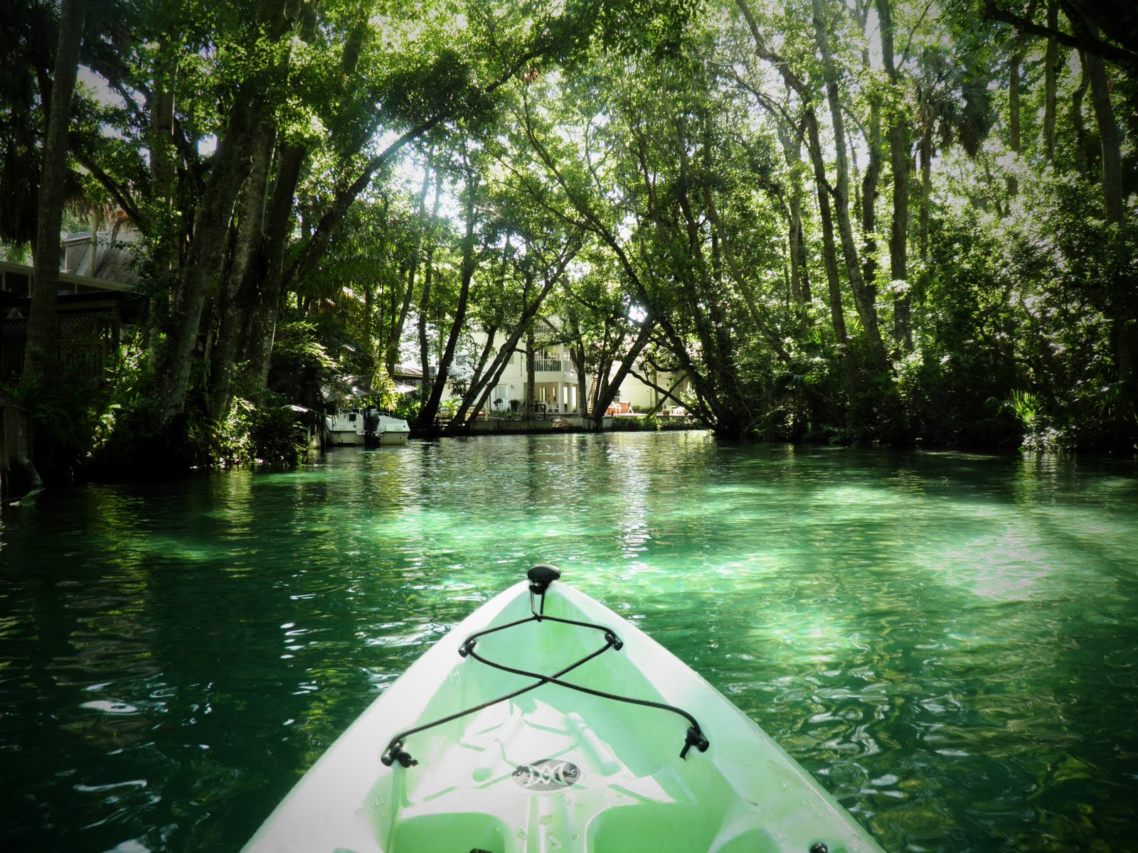 Views From Our Kayak Weeki Wachee River
