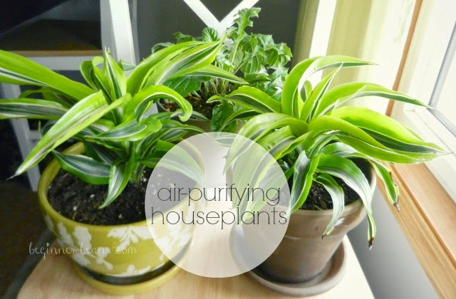 air-purifying houseplants