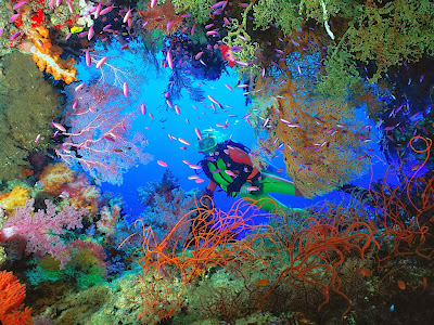 Most Beautiful Diving Locations in Indonesia