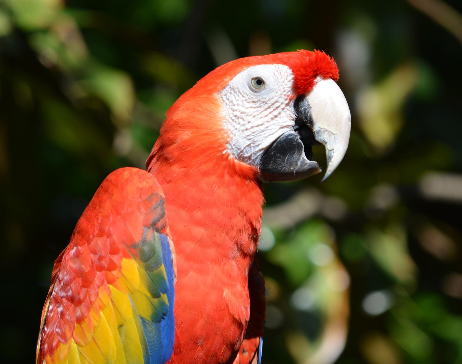 cozy birdhouse | scarlet macaw