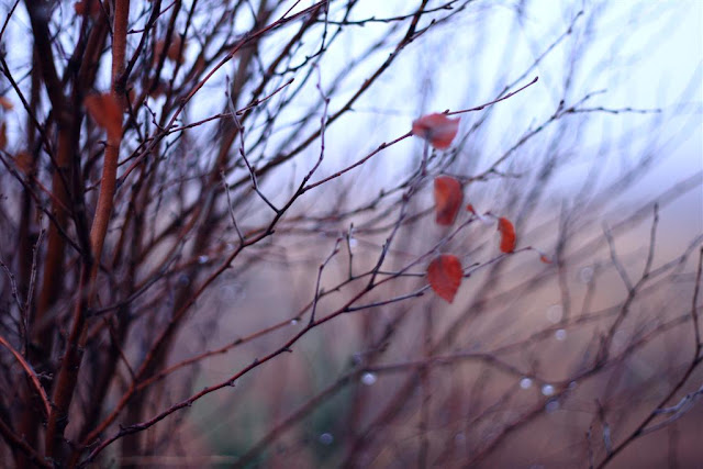 tree branches, raindrops, lonely coloured leaves