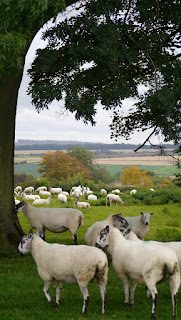 Scene with sheep on the Classic Cotswold Walking Tour