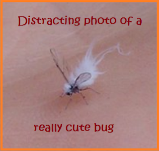"Cute dr. seuss-looking bug surrounded by the words ""Distracting photo of a really cute bug""."