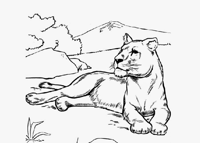 Lioness coloring page free coloring pages and coloring for Lioness coloring pages