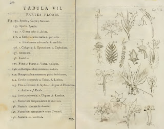A page from Philosophia Botanica showing flower parts.
