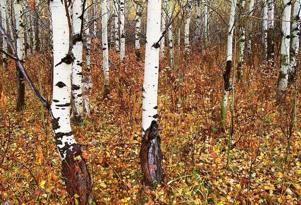 exemplos de camuflagem animal - fotografia de Art Wolfe